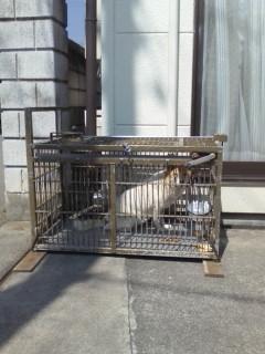 野良犬捕物帖3
